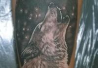 Invictus-Tattoo-Berlin-Budapest-tattoo-artist-taetowiererin-Zsofia-Sophie-Buza-wolf