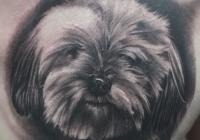 invictus-tattoo-berlin-budapest-laci-kovacs-realistic-scharzweiss-blackandgrey-portait-hund-dog-animal-brust